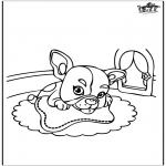 Zwierzęta - SpongeBob - deskorolka