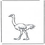 Zwierzęta - Struś 2