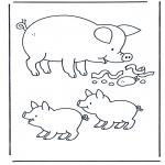 Zwierzęta - Świnka