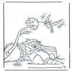 Zwierzęta - Szop i kolibr
