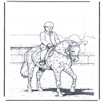 Zwierzęta - Tresura