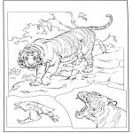 Zwierzęta - Tygrys 3