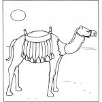 Zwierzęta - Wielbłąd w słońcu