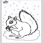 Zwierzęta - Wiewiórka 5