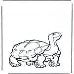 Zwierzęta - Żółw lądowy