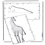 Zwierzęta - Żyrafa  i foka